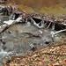 Erdei patak Tél