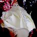 Szilveszteri rózsák