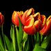 Tulipán Csokor Tél