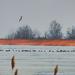 Vadludak a jégen Távolban