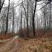 Erdő Tél Táj