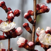 Tavasz Virág Fa
