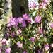 Botanikus kert Tavasz