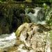 Vízesés Erdő Nyár Alpok