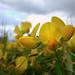 Réten Virágok Sárga
