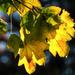 Falevelek levelek