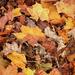 Őszi avar