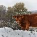 Nagy boci a hóban