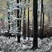 Infravörös erdő