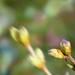 Orgona Virág Tavasz