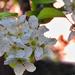 Körte Virág Tavasz