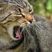 Macska Álmos Nyár