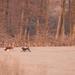 Reggeli napfény Tél Kutyusok