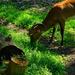Nyíregyházi állatkert