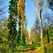 Az ősz színei No 002