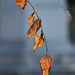 Autumn Leaves 0084