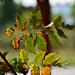 Autumn Leaves 0283