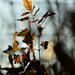 Autumn Leaves 0176