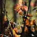Autumn Leaves 0050