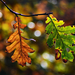 Autumn Leaves 0189