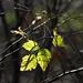 Autumn Leaves 0067