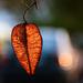 Autumn 0082