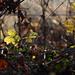 Autumn Leaves 0139