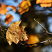 Autumn Leaves 0174