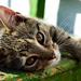 Waggish Cat