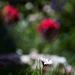 Flower 0027