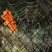 Autumn Nets