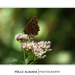 Pillangó az arborétumban