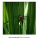 Szigligeti arborétum - pók