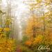 kisklau október indafoto 2560x1440 (4)
