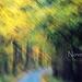 erdős indafoto 2560x1440 másolata