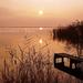 fertő tó indafoto 2048x1536 másolata
