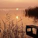 fertő tó indafoto 2560x1440 másolata