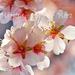 Tavaszváró - március (13)
