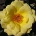 A irigy sárga