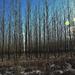 Napfényes erdő