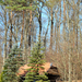 Erdőszélén