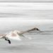 Madarak az ossiachi tóban