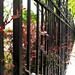 kerítés mentén