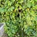 GePaRdLaCeE: P6080174 - indafoto.hu