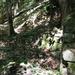 GePaRdLaCeE: P6130285 - indafoto.hu