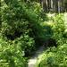 GePaRdLaCeE: P5190307 (Custom) - indafoto.hu