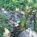 GePaRdLaCeE: P9120633 (Custom) - indafoto.hu
