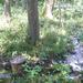 GePaRdLaCeE: P9120629 (Custom) - indafoto.hu