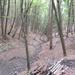 GePaRdLaCeE: P9300936 (Egyedi) - indafoto.hu