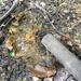 GePaRdLaCeE: P9300965 (Egyedi) - indafoto.hu